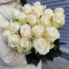 Роза Альба 50 см