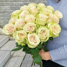 Роза Помпея 50 см