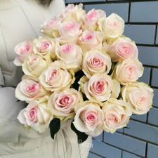 Роза Рогаза 50 см