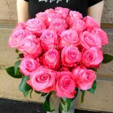 Роза Конгвиста розовая