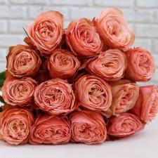 Роза пионовидная 50 см